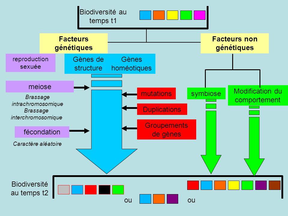 Modification du comportement reproduction sexuée mutations Duplications Groupements de gènes fécondation symbiose Caractère aléatoire meiose Brassage interchromosomique Brassage intrachromosomique Gènes de structure Gènes homéotiques Facteurs génétiques Facteurs non génétiques Biodiversité au temps t1 Biodiversité au temps t2 ou