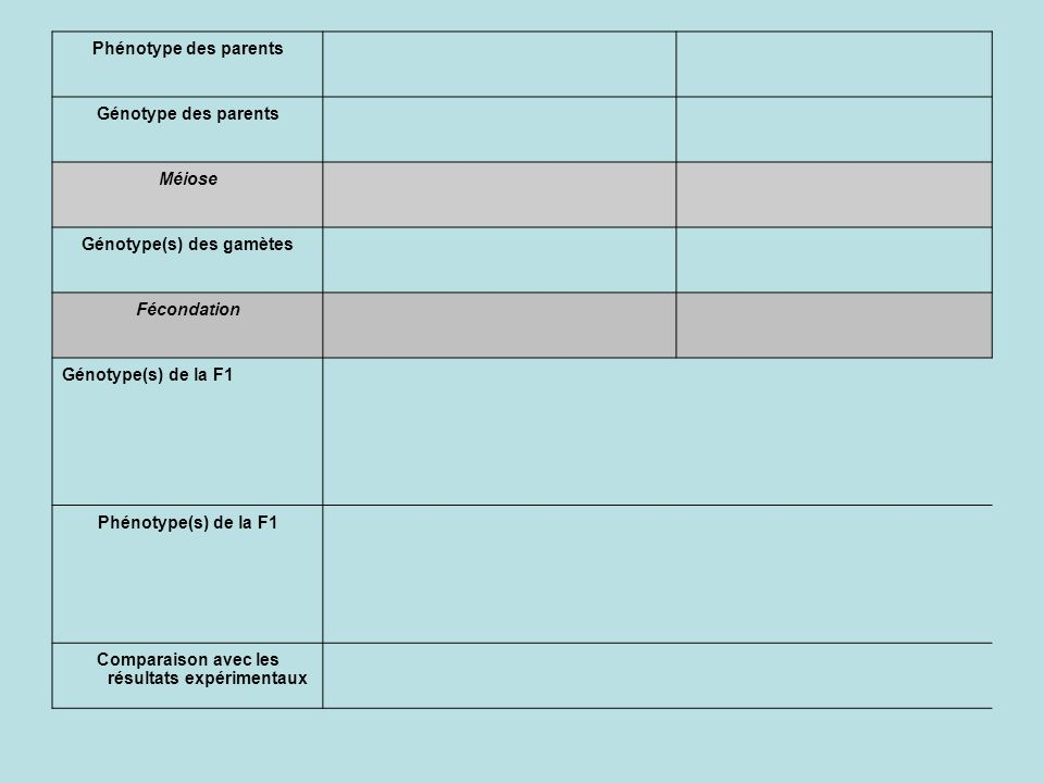 Phénotype des parents Génotype des parents Méiose Génotype(s) des gamètes Fécondation Génotype(s) de la F1 Phénotype(s) de la F1 Comparaison avec les résultats expérimentaux