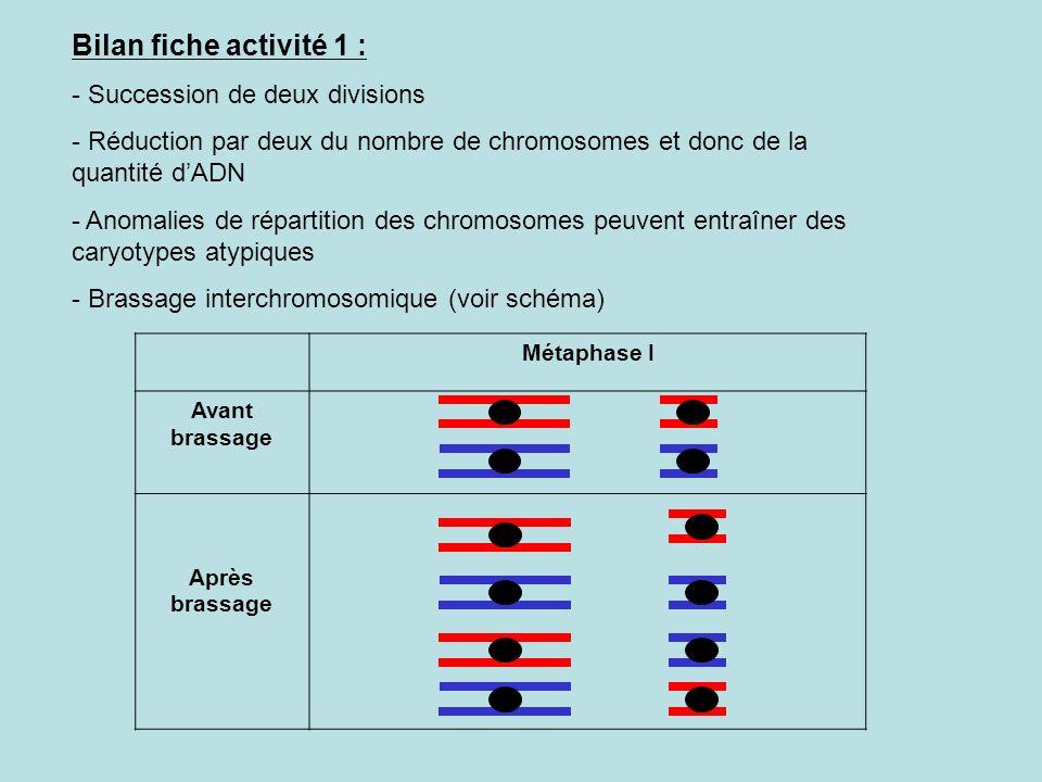 Bilan fiche activité 1 : - Succession de deux divisions - Réduction par deux du nombre de chromosomes et donc de la quantité dADN - Anomalies de répartition des chromosomes peuvent entraîner des caryotypes atypiques - Brassage interchromosomique (voir schéma) Métaphase I Avant brassage Après brassage