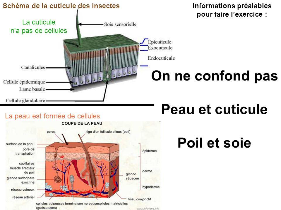 Schéma de la cuticule des insectes On ne confond pas Peau et cuticule Poil et soie Informations préalables pour faire lexercice : La cuticule n a pas de cellules La peau est formée de cellules