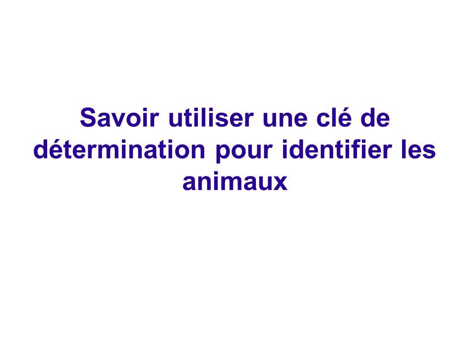 Savoir utiliser une clé de détermination pour identifier les animaux