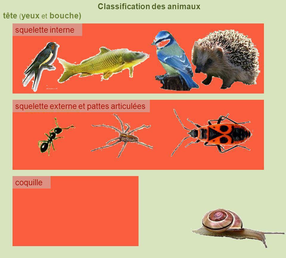 tête ( yeux et bouche) Classification des animaux squelette interne squelette externe coquille squelette externe et pattes articulées