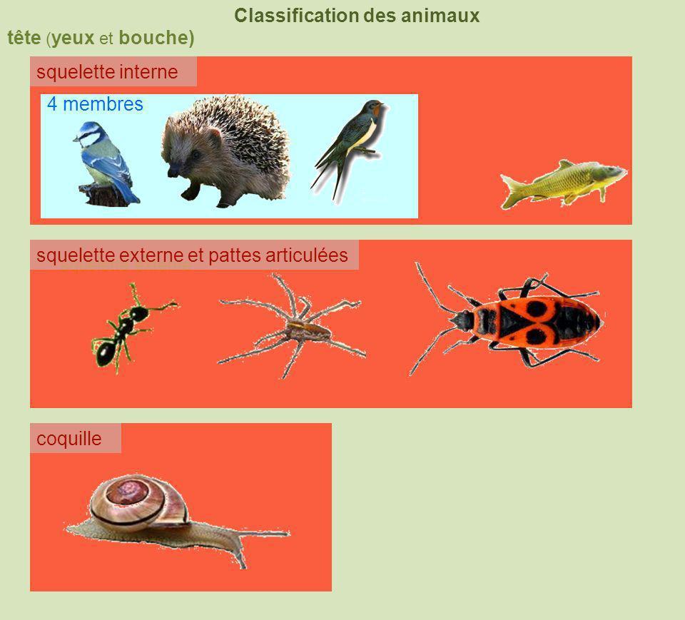 tête ( yeux et bouche) Classification des animaux squelette interne squelette externe coquille squelette externe et pattes articulées 4 membres