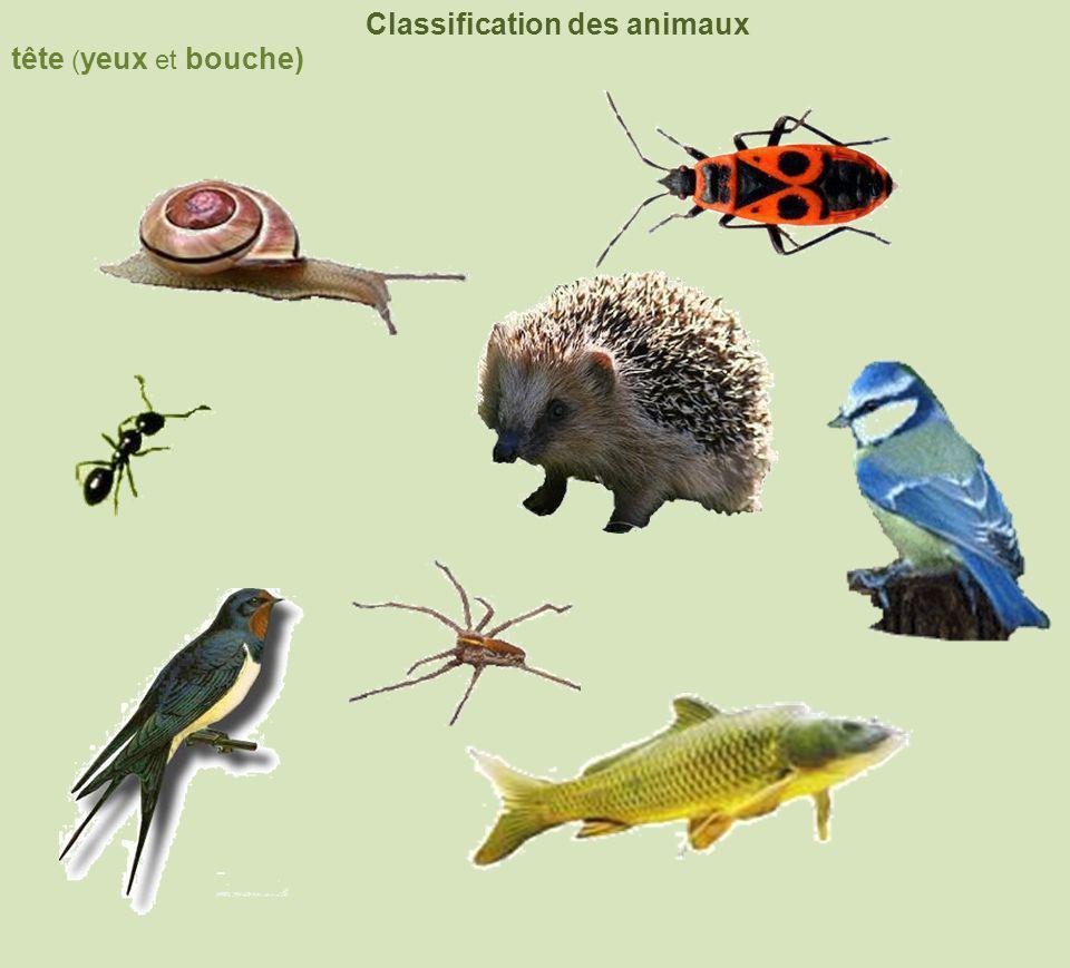 Classification des animaux tête ( yeux et bouche)