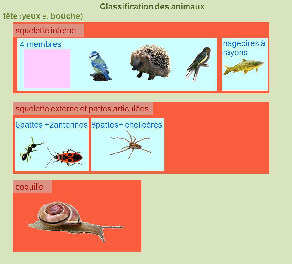 tête ( yeux et bouche) Classification des animaux squelette interne squelette externe coquille squelette externe et pattes articulées 4 membres nageoi