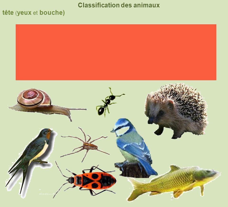 tête ( yeux et bouche) Classification des animaux squelette interne squelette externe coquille squelette externe et pattes articulées 4 membres nageoires à rayons 6pattes +2antennes8pattes+ chélicères
