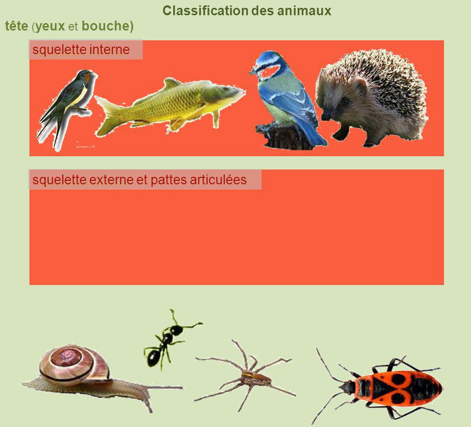 tête ( yeux et bouche) Classification des animaux squelette interne squelette externe coquille squelette externe et pattes articulées 4 membres nageoires à rayons 6pattes +2antennes8pattes+ chélicères poilsplumes