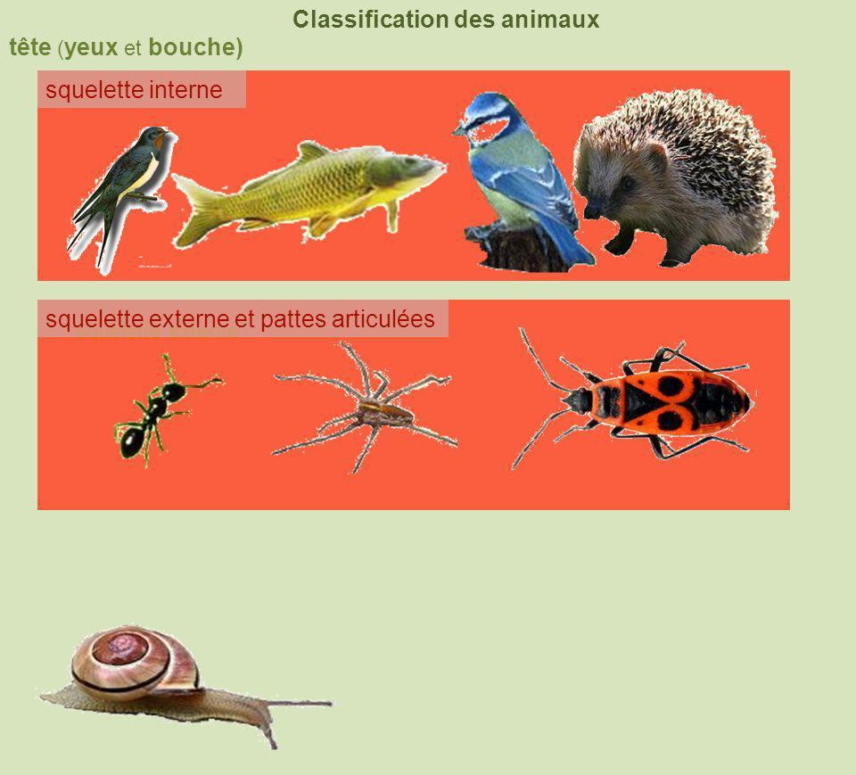 tête ( yeux et bouche) Classification des animaux squelette interne squelette externe coquille squelette externe et pattes articulées 4 membres nageoires à rayons 6 pattes+2antennes8 pattes+chélicères poilsplumes