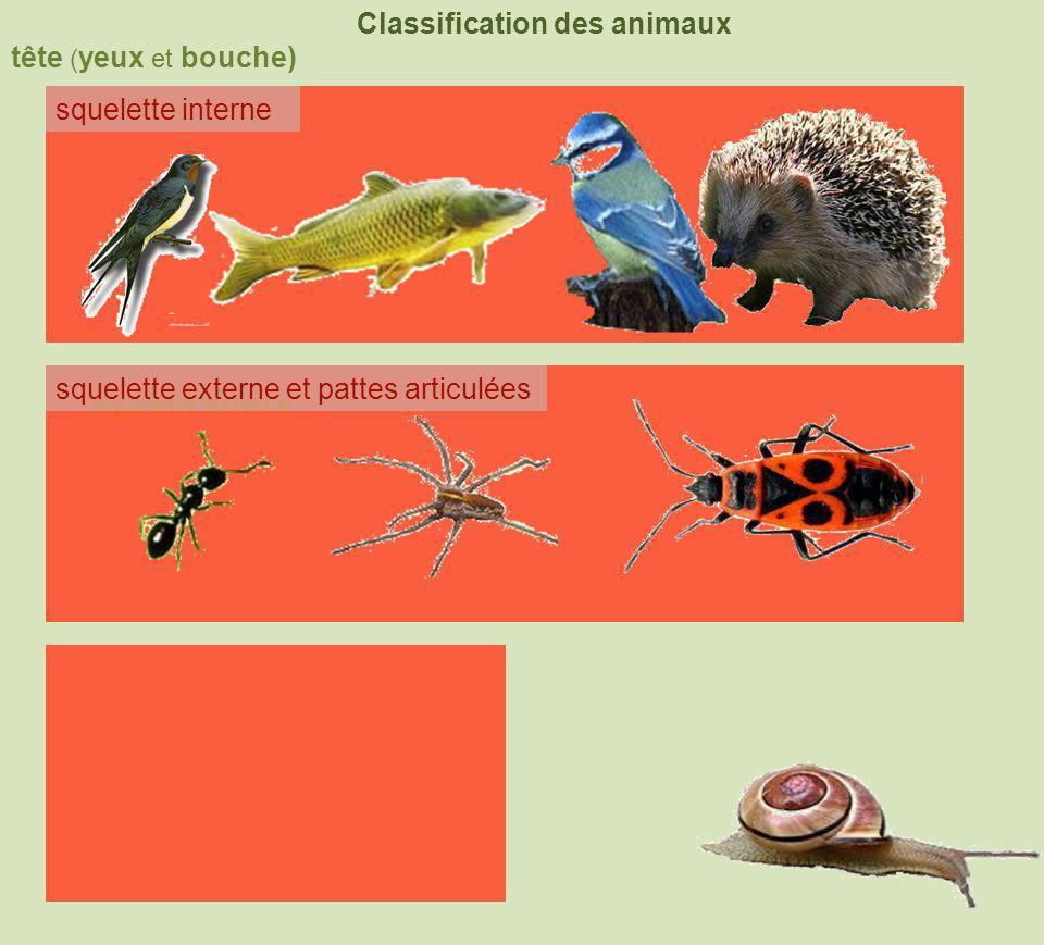 tête ( yeux et bouche) Classification des animaux squelette interne squelette externe coquille squelette externe et pattes articulées 4 membres nageoires à rayons 6pattes +2antennes