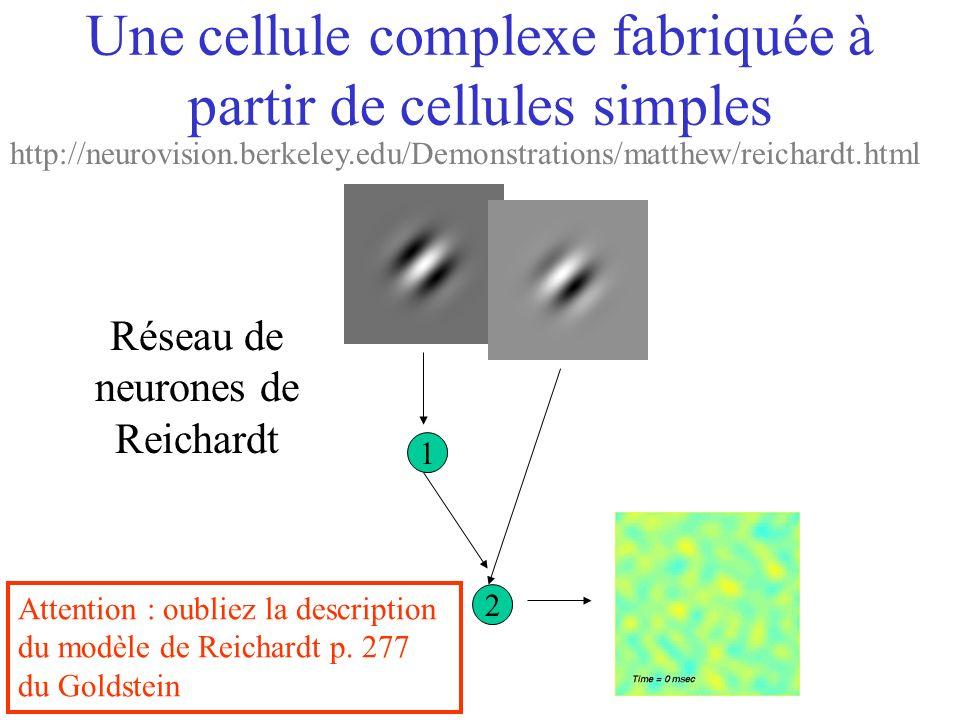Une cellule complexe fabriquée à partir de cellules simples 1 2 Réseau de neurones de Reichardt Attention : oubliez la description du modèle de Reicha