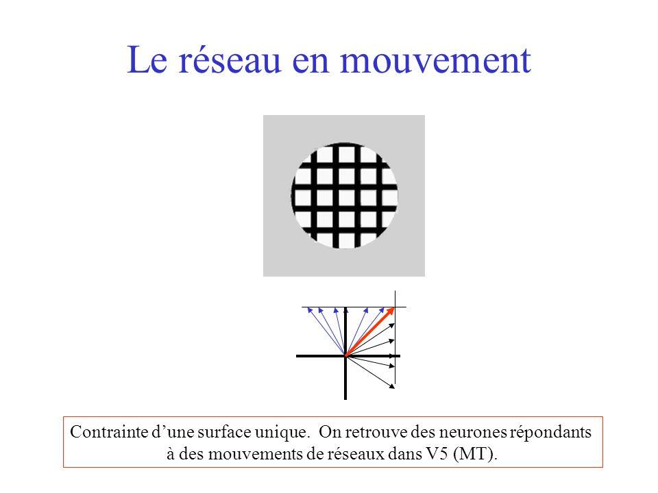 Le réseau en mouvement Contrainte dune surface unique. On retrouve des neurones répondants à des mouvements de réseaux dans V5 (MT).