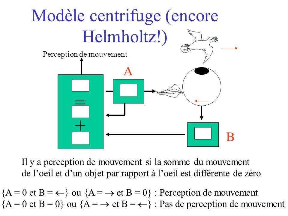 Modèle centrifuge (encore Helmholtz!) Perception de mouvement =+=+ {A = 0 et B = } ou {A = et B = 0} : Perception de mouvement {A = 0 et B = 0} ou {A = et B = } : Pas de perception de mouvement Il y a perception de mouvement si la somme du mouvement de loeil et dun objet par rapport à loeil est différente de zéro A B