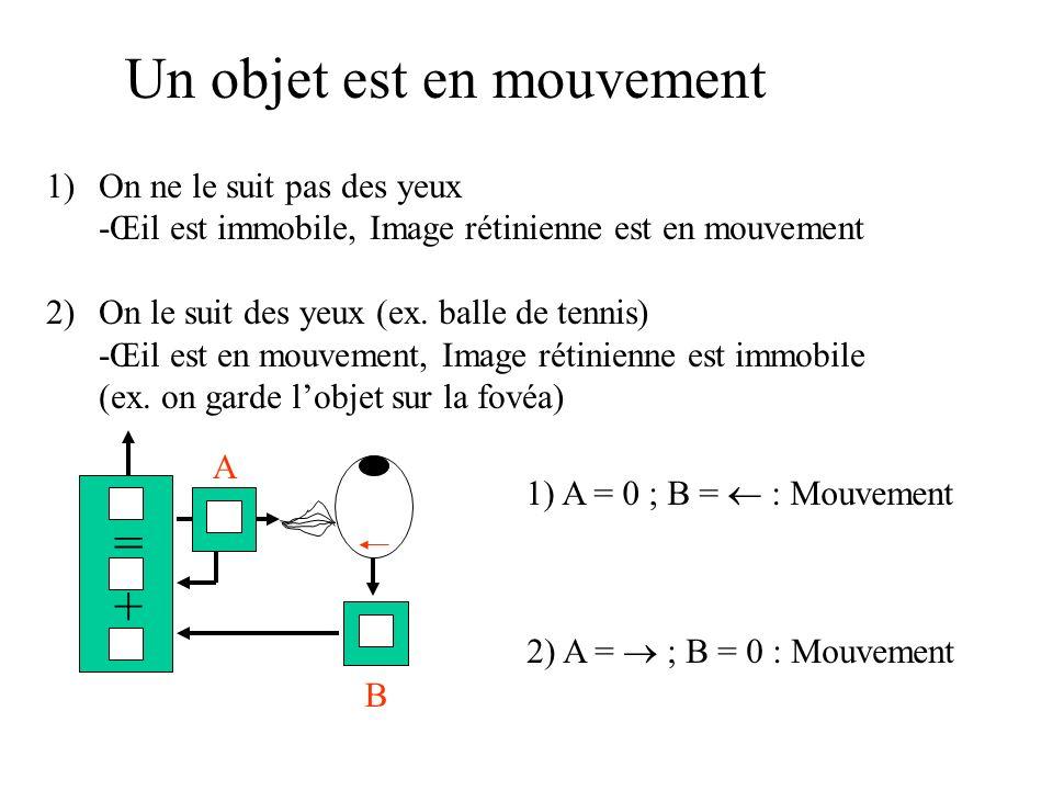 Un objet est en mouvement 1)On ne le suit pas des yeux -Œil est immobile, Image rétinienne est en mouvement 2)On le suit des yeux (ex. balle de tennis
