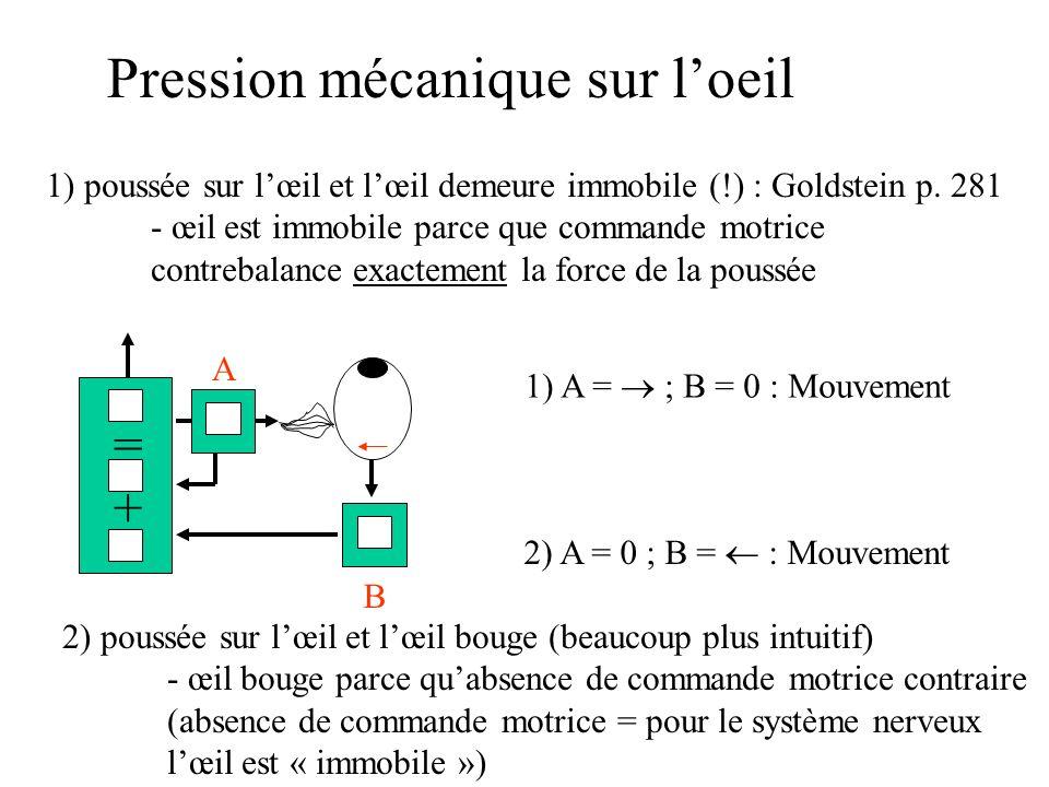 Pression mécanique sur loeil 1) poussée sur lœil et lœil demeure immobile (!) : Goldstein p. 281 - œil est immobile parce que commande motrice contreb