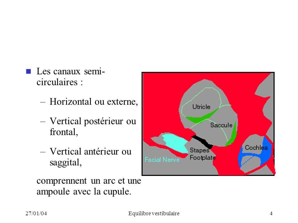 27/01/04Equilibre vestibulaire4 Les canaux semi- circulaires : –Horizontal ou externe, –Vertical postérieur ou frontal, –Vertical antérieur ou saggita
