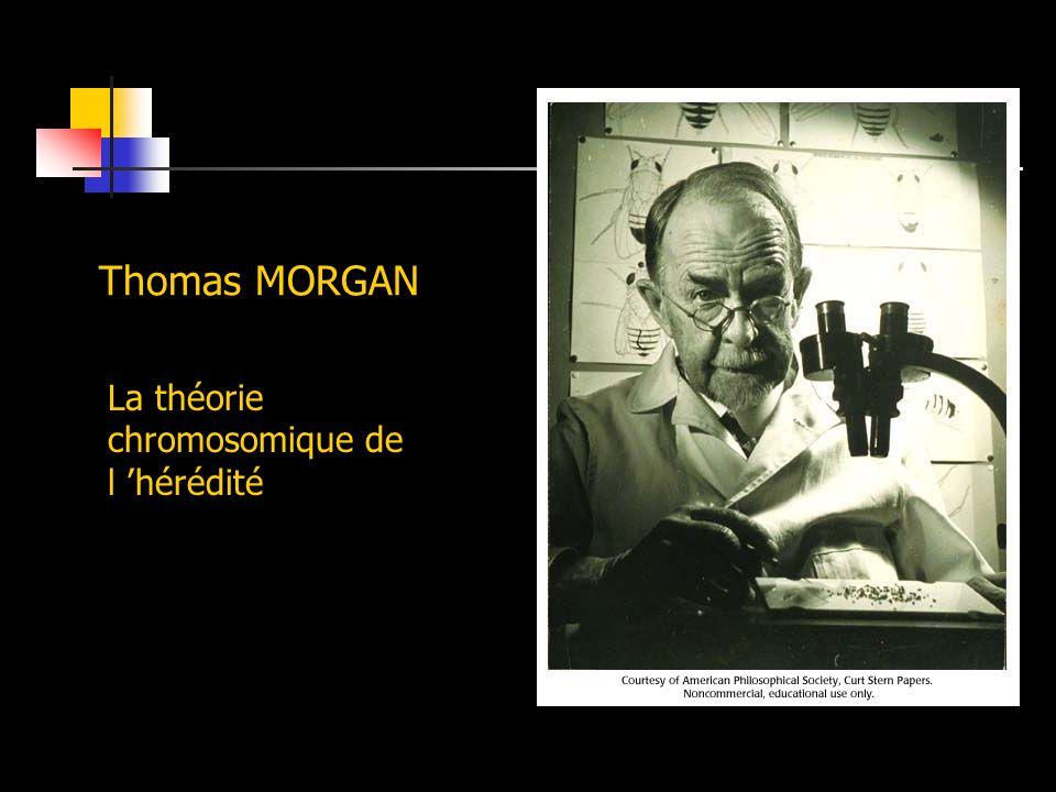 Thomas MORGAN La théorie chromosomique de l hérédité