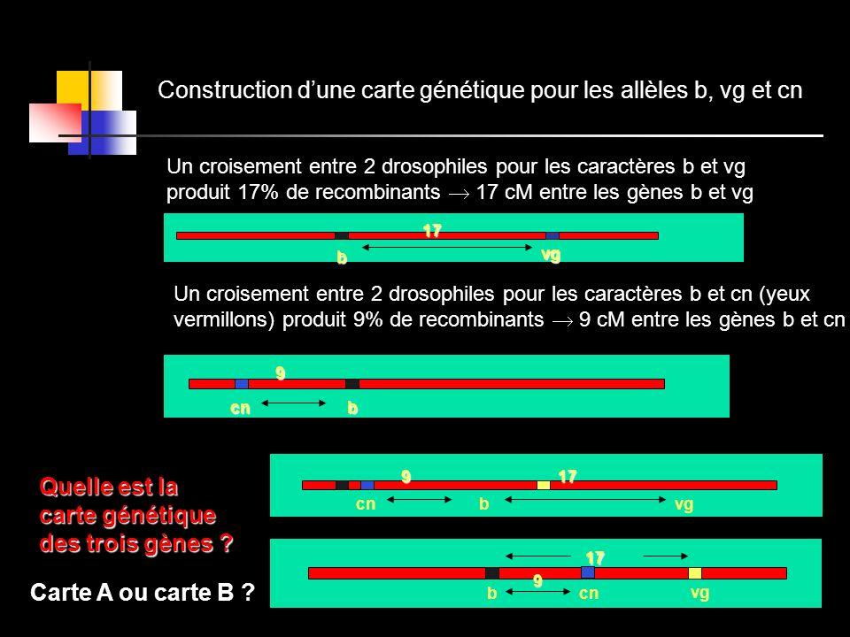 Construction dune carte génétique pour les allèles b, vg et cn Un croisement entre 2 drosophiles pour les caractères b et vg produit 17% de recombinan