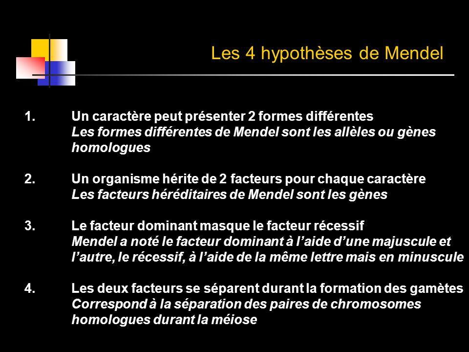1.Un caractère peut présenter 2 formes différentes Les formes différentes de Mendel sont les allèles ou gènes homologues 2.Un organisme hérite de 2 fa