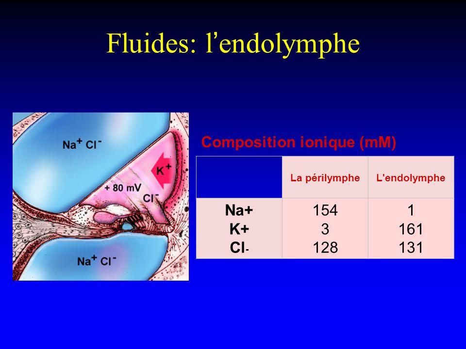 Fluides: lendolymphe Composition ionique (mM) La périlympheL'endolymphe Na+ K+ Cl - 154 3 128 1 161 131