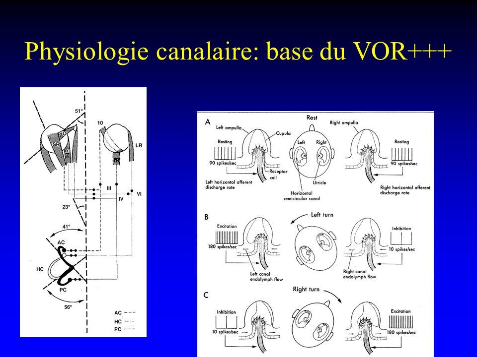 Physiologie canalaire: base du VOR+++