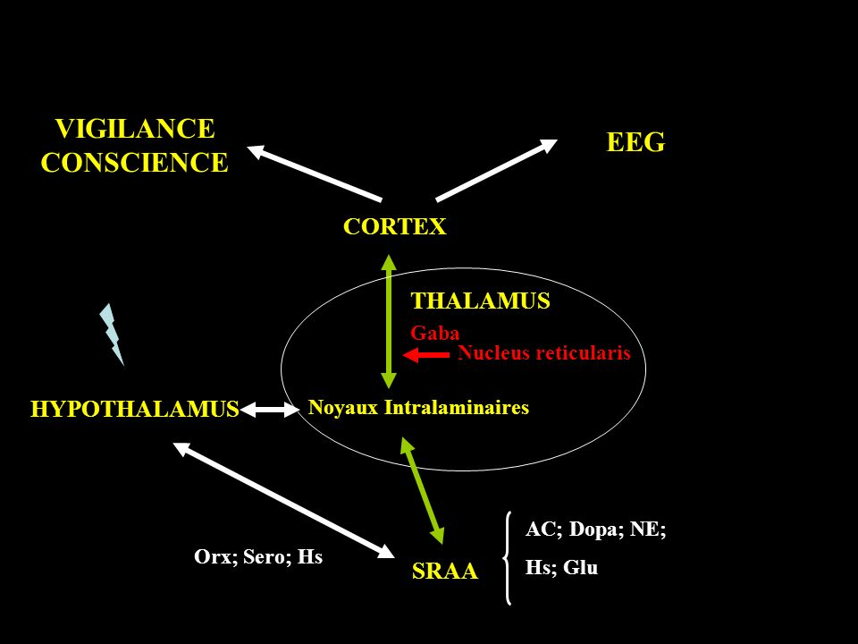 CORTEX THALAMUS SRAA HYPOTHALAMUS Noyaux Intralaminaires Nucleus reticularis AC; Dopa; NE; Hs; Glu Gaba Orx; Sero; Hs EEG VIGILANCE CONSCIENCE