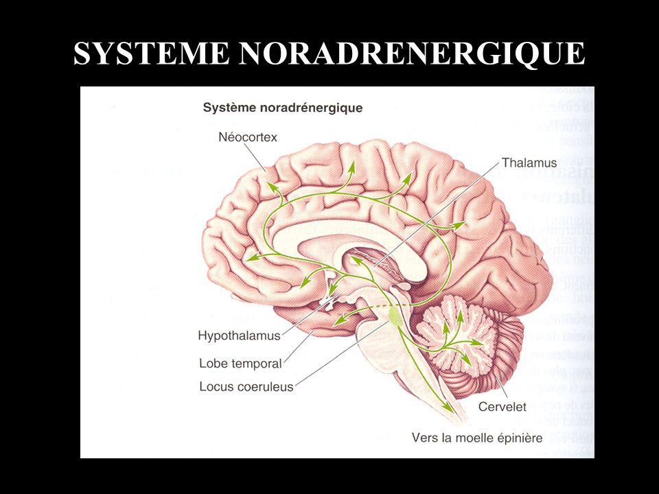 EXAMEN NEUROLOGIQUE RECHERCHE DUNE ASYMETRIE (transversale ou en hémicorps) 1.Réponses aux stimulations 2.Réflexes ostéo-tendineux 3.Réflexe cutanéo-plantaire 4.Tonus musculaire 5.Manœuvre de Pierre-Marie Foix