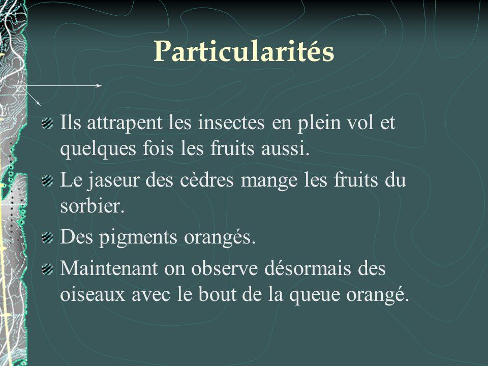 Particularités Ils attrapent les insectes en plein vol et quelques fois les fruits aussi. Le jaseur des cèdres mange les fruits du sorbier. Des pigmen