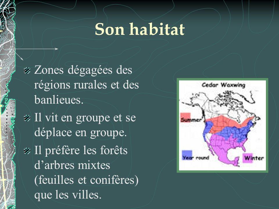 Son habitat Zones dégagées des régions rurales et des banlieues. Il vit en groupe et se déplace en groupe. Il préfère les forêts darbres mixtes (feuil