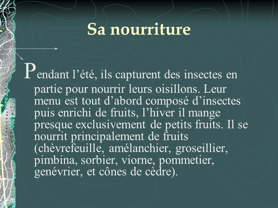 Sa nourriture P endant lété, ils capturent des insectes en partie pour nourrir leurs oisillons. Leur menu est tout dabord composé dinsectes puis enric