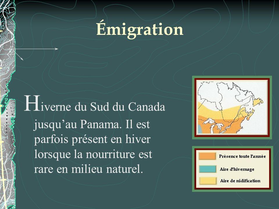 Émigration H iverne du Sud du Canada jusquau Panama. Il est parfois présent en hiver lorsque la nourriture est rare en milieu naturel.