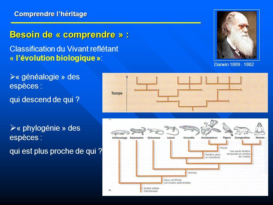 Comprendre lhéritage « généalogie » des espèces : qui descend de qui ? Besoin de « comprendre » : Classification du Vivant reflétant « lévolution biol