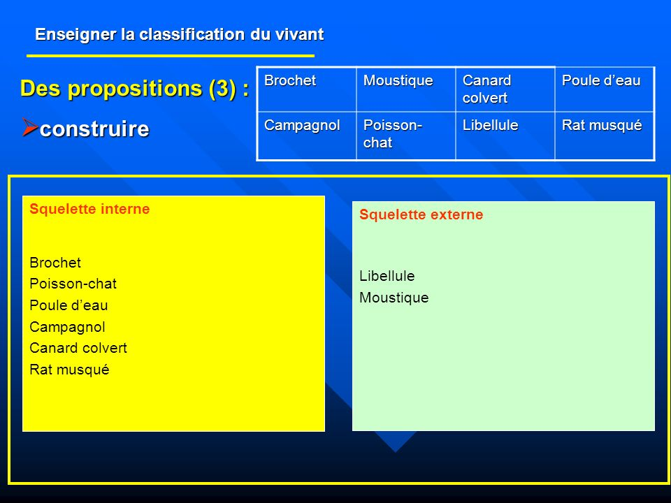 Enseigner la classification du vivant Des propositions (3) : construire construire BrochetMoustique Canard colvert Poule deau Campagnol Poisson- chat