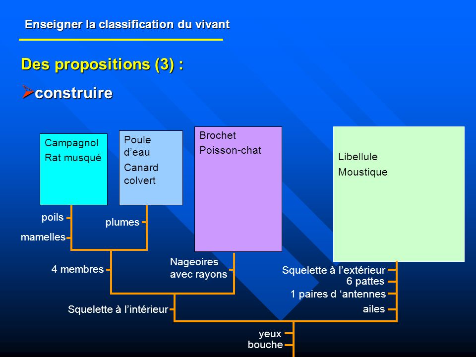 Enseigner la classification du vivant Des propositions (3) : construire construire Libellule Moustique Brochet Poisson-chat Campagnol Rat musqué Poule