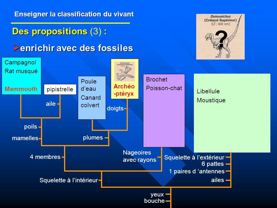 Enseigner la classification du vivant Des propositions : Des propositions (3) : enrichir avec des fossiles enrichir avec des fossiles Libellule Mousti