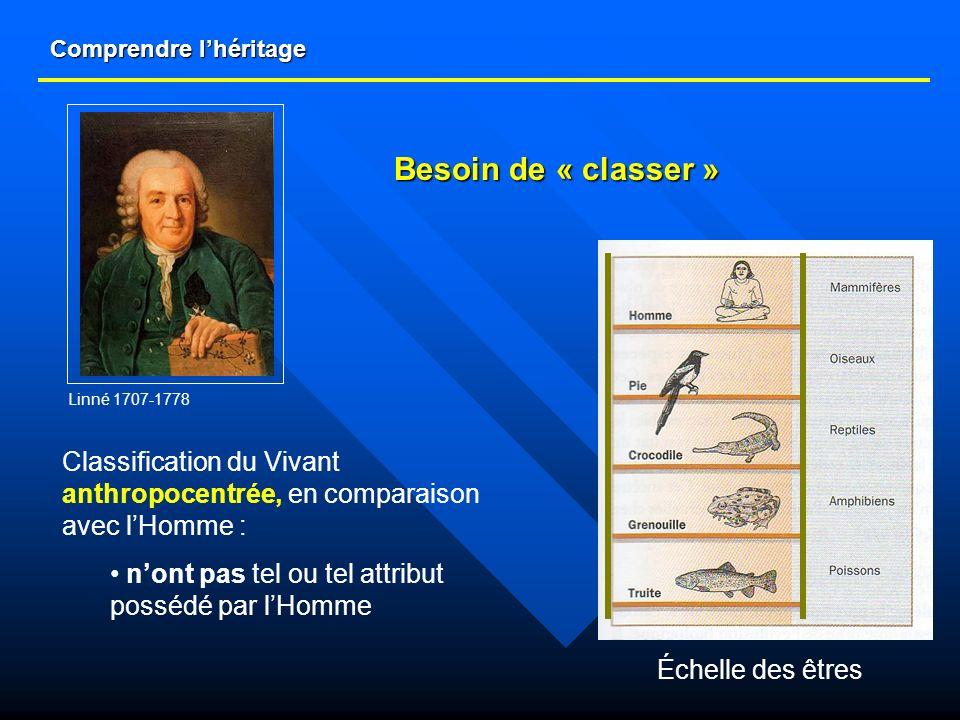 Comprendre lhéritage Classification du Vivant anthropocentrée, en comparaison avec lHomme : nont pas tel ou tel attribut possédé par lHomme Échelle de
