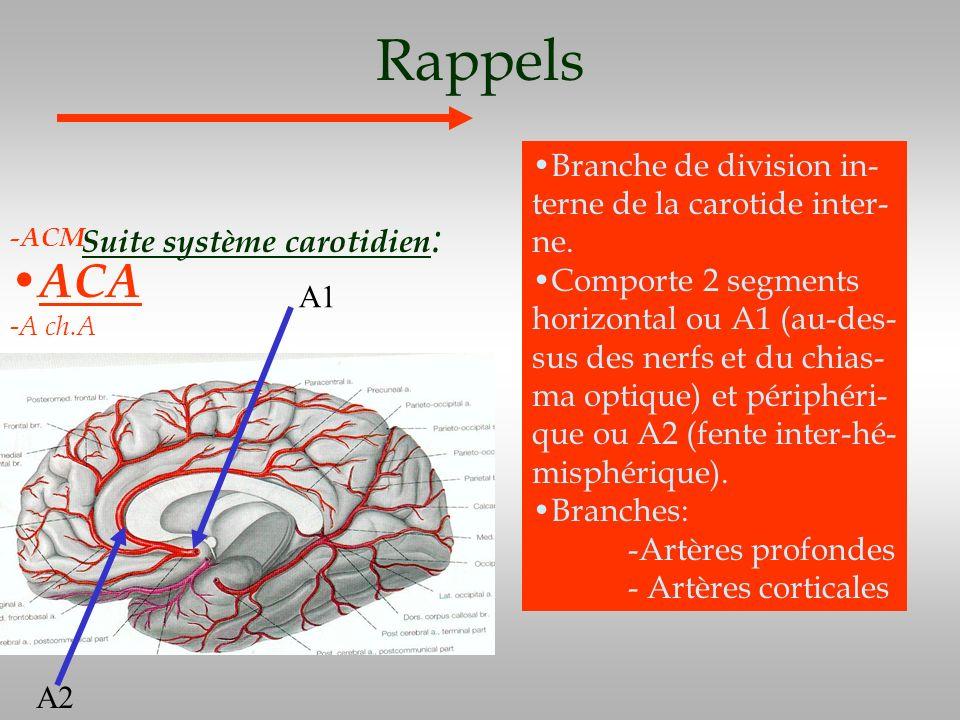 Rappels Suite système carotidien : -ACM ACA -A ch.A Branche de division in- terne de la carotide inter- ne. Comporte 2 segments horizontal ou A1 (au-d