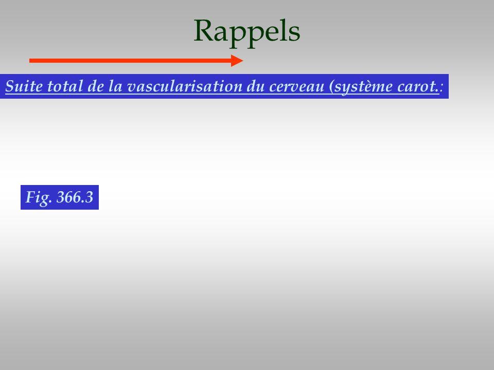 Rappels Suite total de la vascularisation du cerveau (système carot. : Fig. 366.3