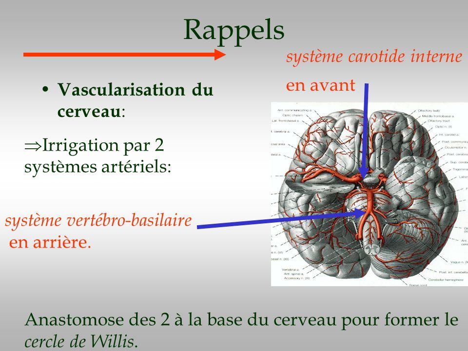 Rappels Vascularisation du cerveau : Irrigation par 2 systèmes artériels: Anastomose des 2 à la base du cerveau pour former le cercle de Willis. systè