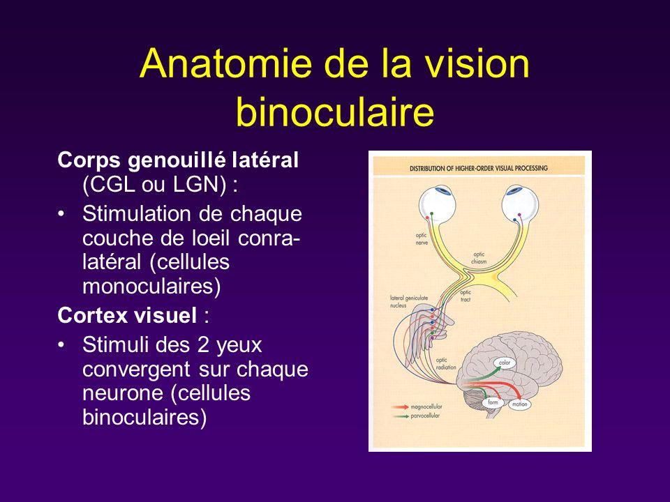 Anatomie de la vision binoculaire Corps genouillé latéral (CGL ou LGN) : Stimulation de chaque couche de loeil conra- latéral (cellules monoculaires)