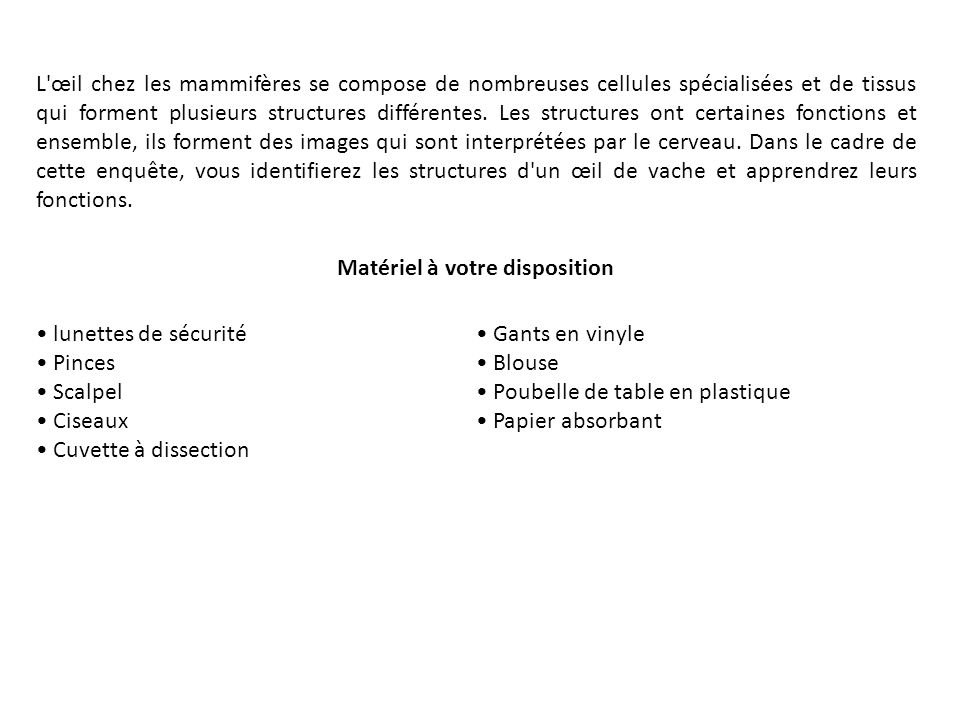 Les caractéristiques externes de lœil 1.Recherchez la cornée, la sclérotique et le nerf optique.