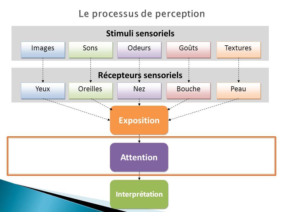 Récepteurs sensoriels Stimuli sensoriels Images Sons Odeurs Goûts Textures Yeux Oreilles Nez Bouche Peau Interprétation Attention Exposition