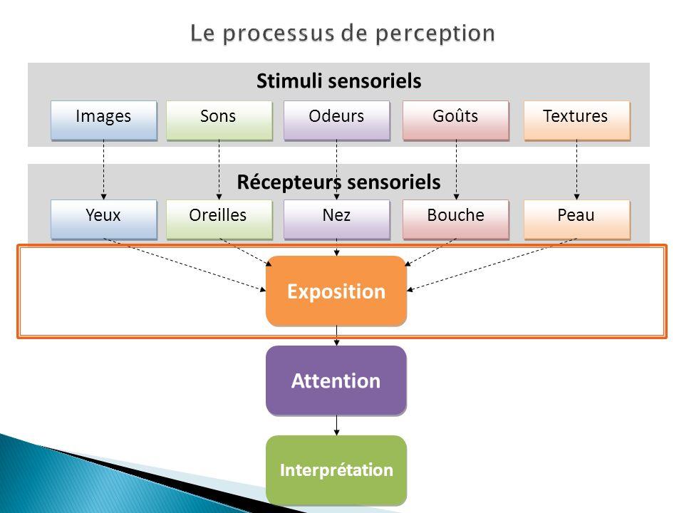 A lieu lorsqu un stimulus est perceptible par les récepteurs sensoriels Tous les stimuli ne sont pas perçus seuils sensoriels Seuils sensoriels : la plus faible intensité de stimulus que peut enregistrer un canal sensoriel Seuil absolu vs.