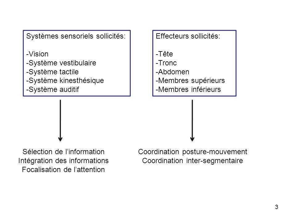 Niveaux de fonctionnement sollicités: -Réflexes -Automatismes sensori-moteurs -Contrôle cognitif Coopération et interférences entre ces niveaux de fonctionnement 4 Gestion de lincertitude: -Anticipation -Préparation motrice -Réaction Processus prédictifs et Processus réactifs