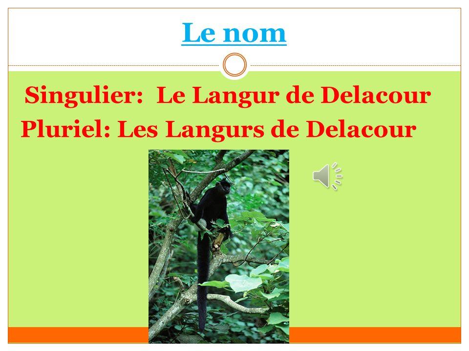 Le nom Singulier: Le Langur de Delacour Pluriel: Les Langurs de Delacour