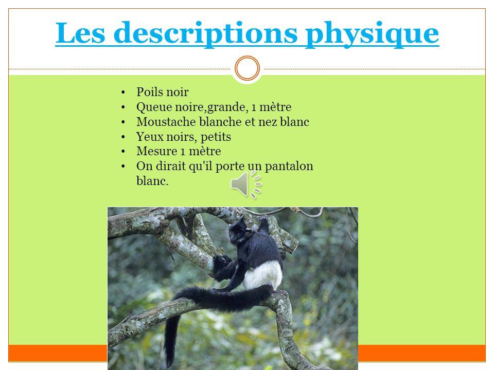 Les descriptions physique Poils noir Queue noire,grande, 1 mètre Moustache blanche et nez blanc Yeux noirs, petits Mesure 1 mètre On dirait qu il porte un pantalon blanc.