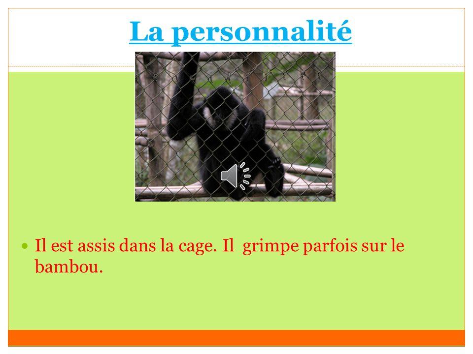 La personnalité Il est assis dans la cage. Il grimpe parfois sur le bambou.