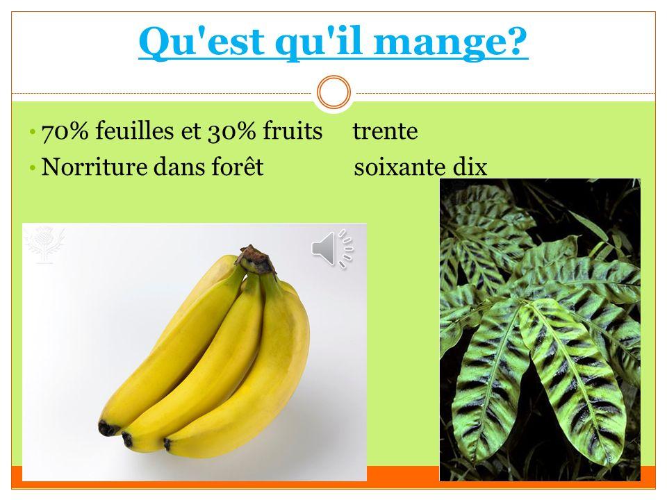 Qu est qu il mange? 70% feuilles et 30% fruits trente Norriture dans forêt soixante dix