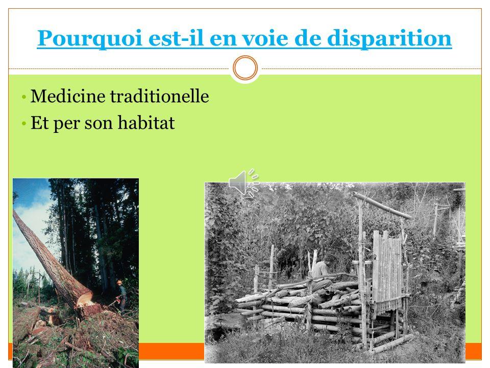 Qu'est qu'il mange? 70% feuilles et 30% fruits trente Norriture dans forêt soixante dix