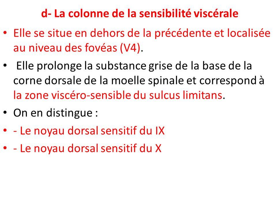 d- La colonne de la sensibilité viscérale Elle se situe en dehors de la précédente et localisée au niveau des fovéas (V4). Elle prolonge la substance
