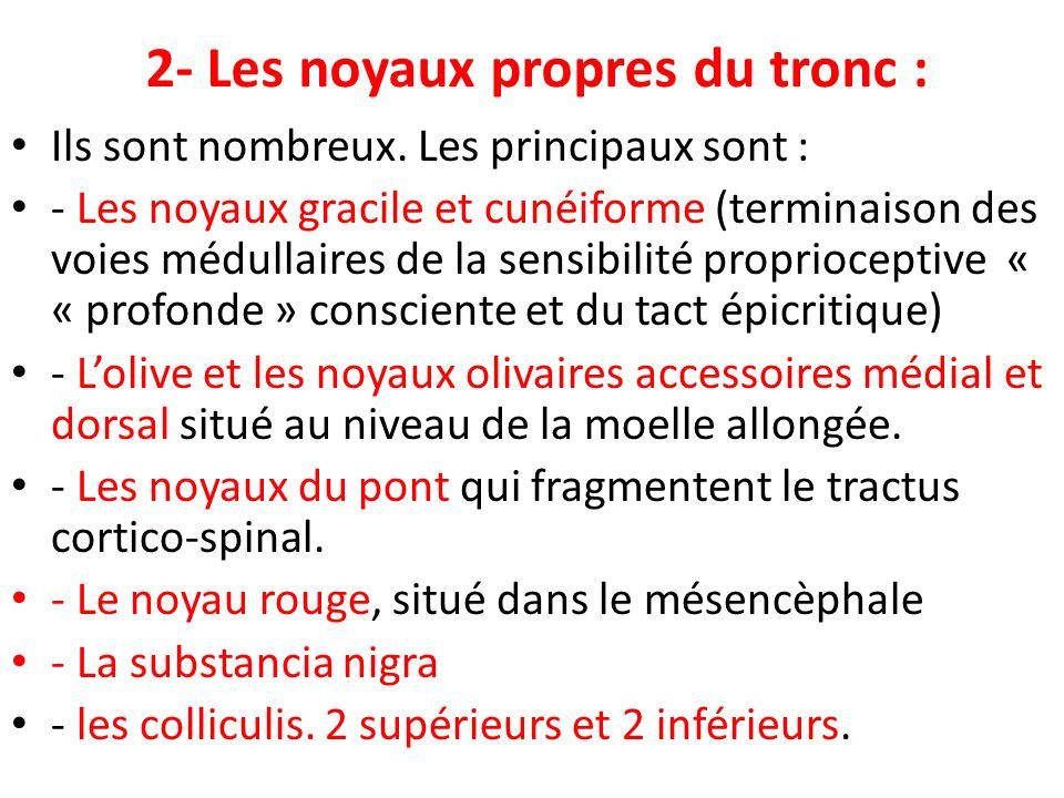 2- Les noyaux propres du tronc : Ils sont nombreux. Les principaux sont : - Les noyaux gracile et cunéiforme (terminaison des voies médullaires de la